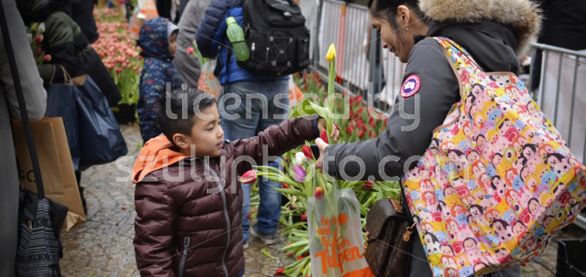 The National Tulip Day in Amsterdam