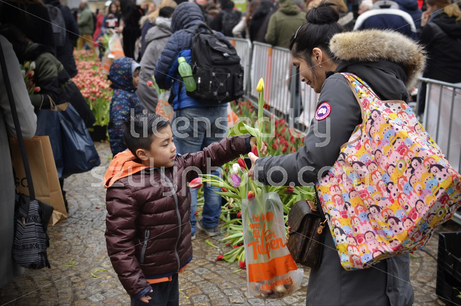 Boy and his mother at the National Tulip Day - Adam Szuly Photography, editorial license