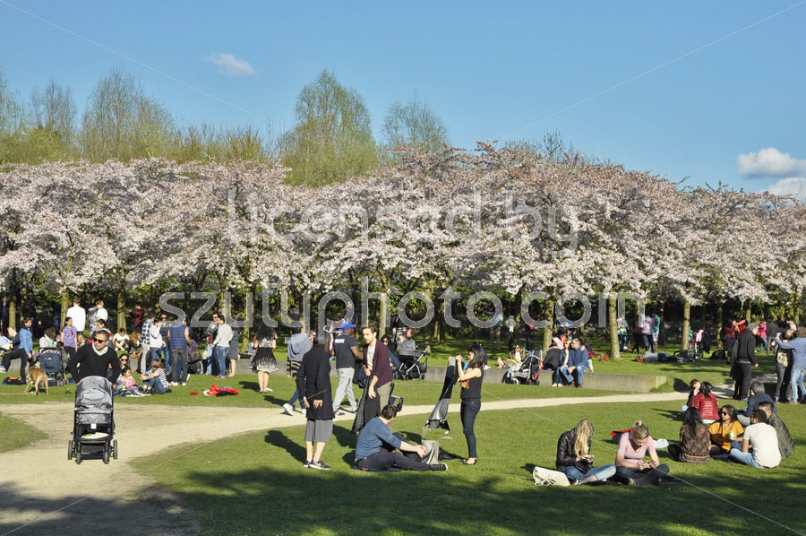 Center of the Japanese cherry blossom garden - Adam Szuly Photography