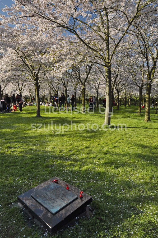 Memorial, Japanese cherry blossom garden - Adam Szuly Photography