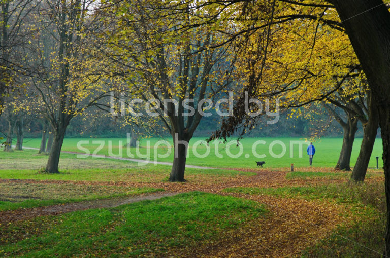 Dog walking in the autumn forest - Adam Szuly Photography