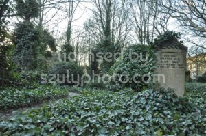 Grave stone and ivy - Adam Szuly Photography