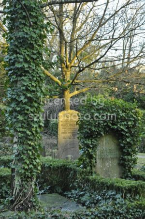 Gravestones among the trees - Adam Szuly Photography