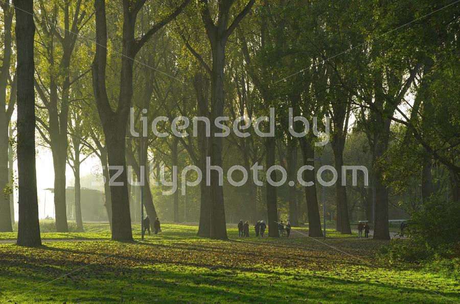 Pedestrians in the autumn forest - Adam Szuly Photography