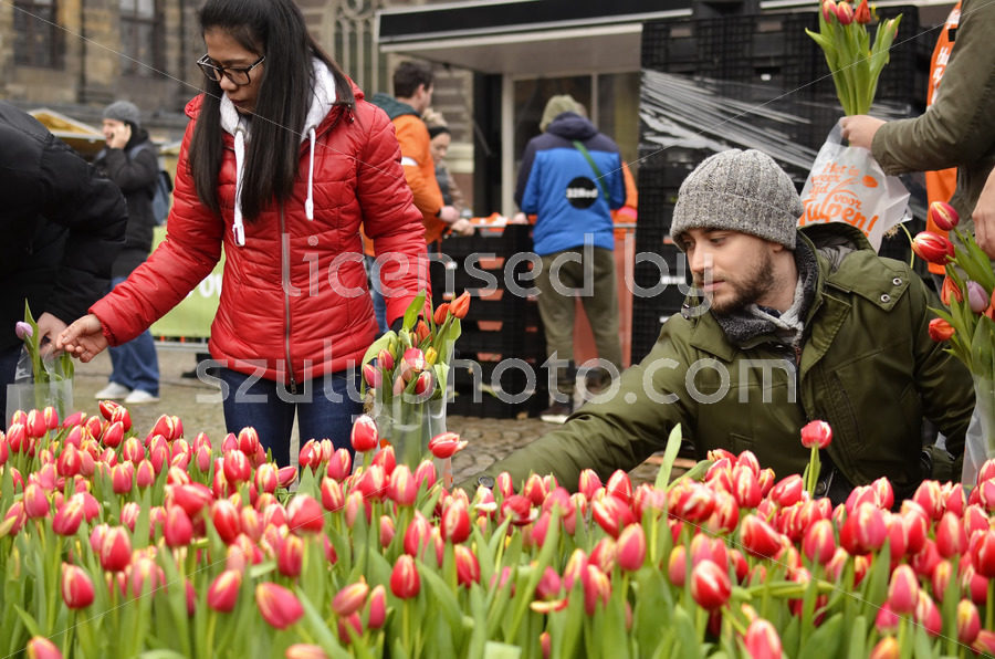 Selecting flowers at the National Tulip Day - Adam Szuly Photography