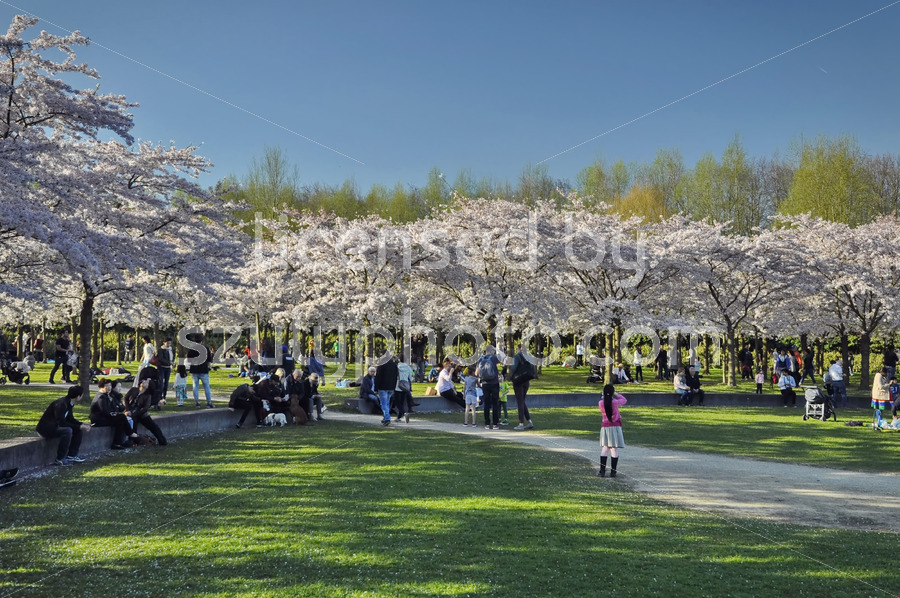 Springtime visitors in the Japanese garden - Adam Szuly Photography