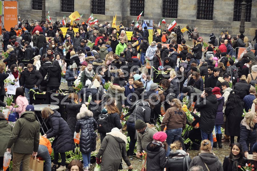 The National Tulip Day event in Amsterdam - Adam Szuly Photography