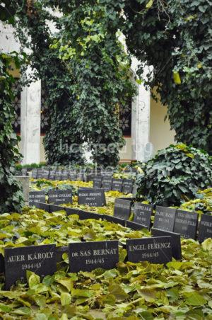 The synagogue garden - Adam Szuly Photography