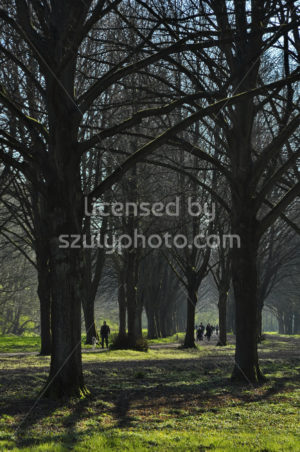Visitors on a path in the Amsterdam Forest - Adam Szuly Photography