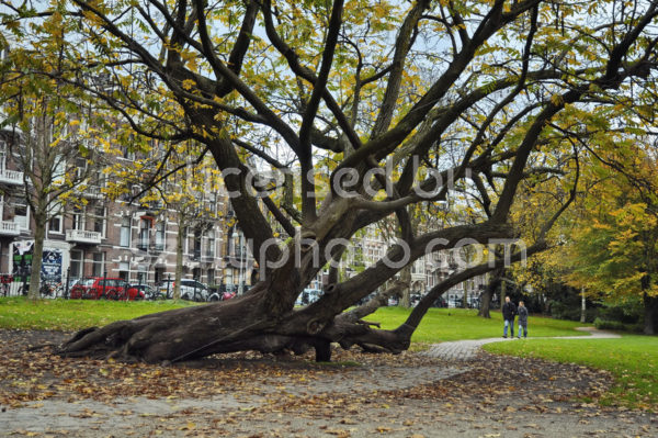 Walking path in the Sarphatipark and an old tree - Adam Szuly Photography